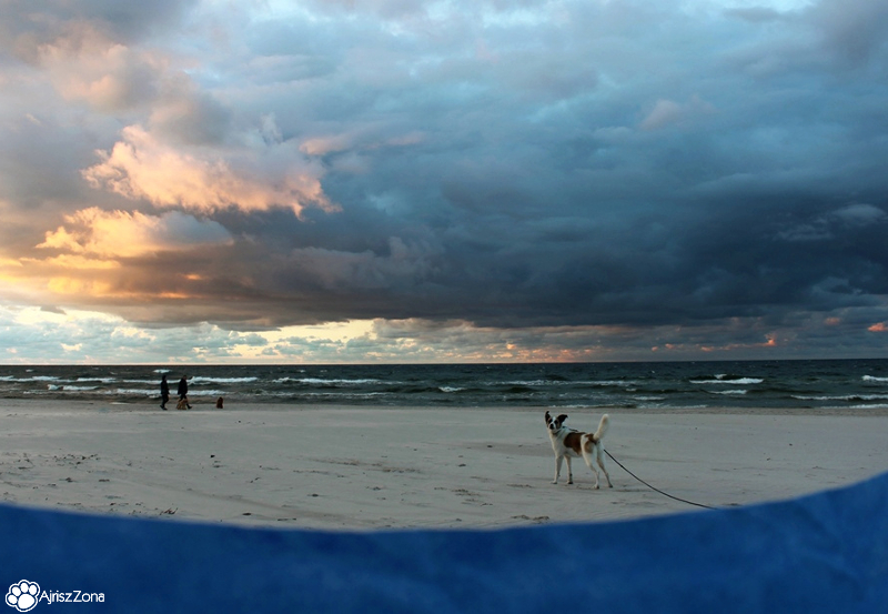 Gdzie nad morze z psem