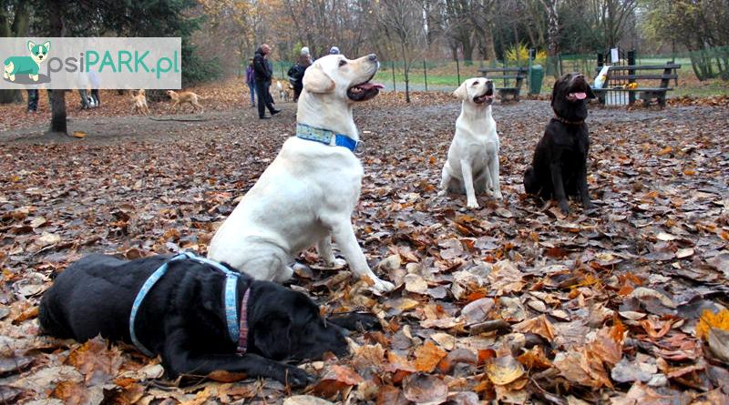 Wybieg dla psów Chorzów Park Śląski
