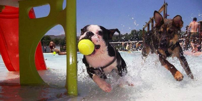 wodny park dla psów Hiszpania