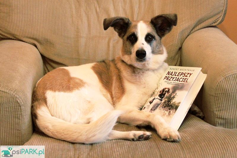 Najlepszy przyjaciel. Człowiek i pies - bohaterstwo podczas drugiej wojny światowej