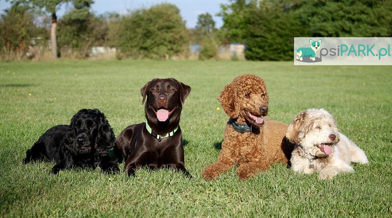 Wybieg dla psów Konstancin-Jeziorna