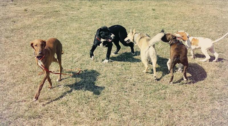 Wybieg dla psów Sierakowice
