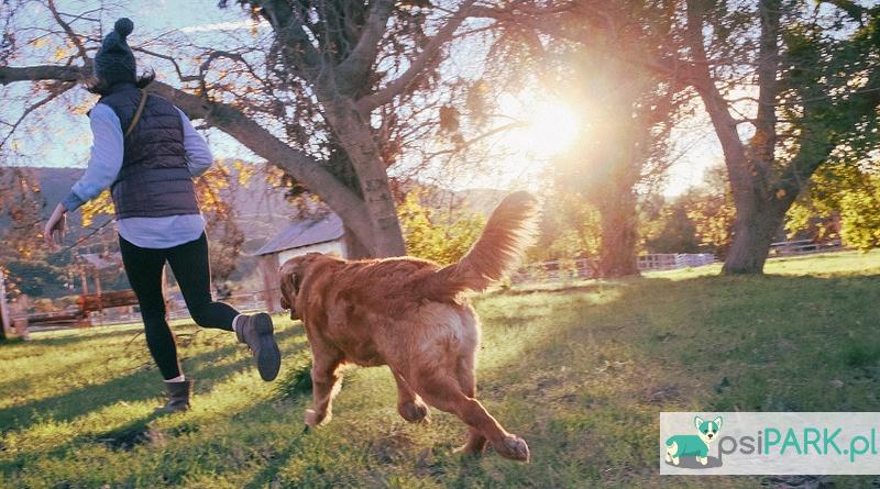 32 najczęstsze błędy na wybiegu dla psów