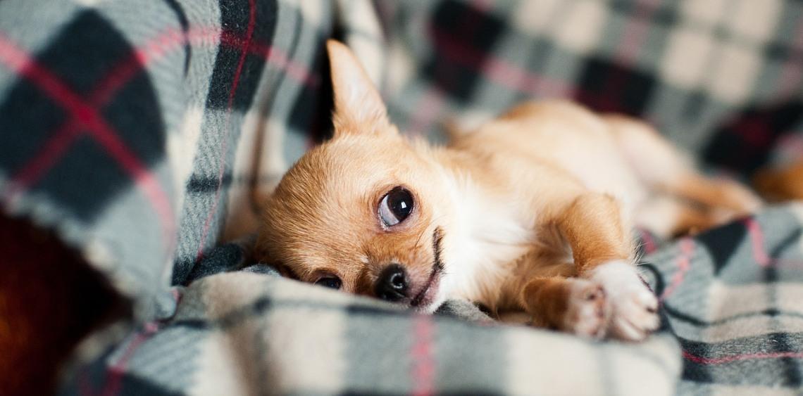 Masaż dla psa TTouch
