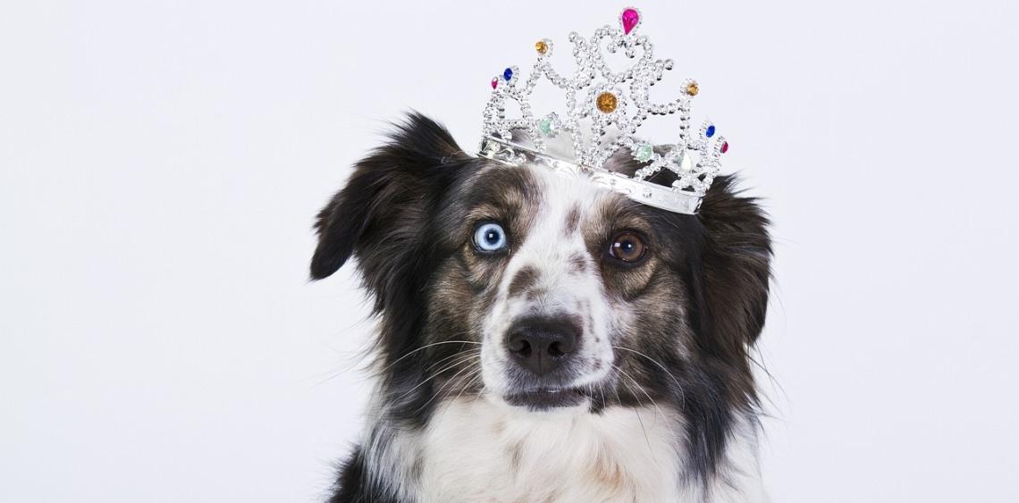 10 oznak, że zwariowałeś na punkcie swojego psa