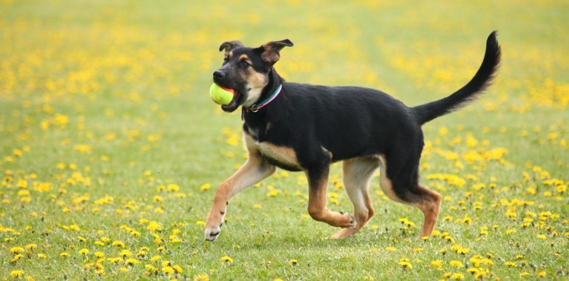 Wybiegi dla psów Śląsk