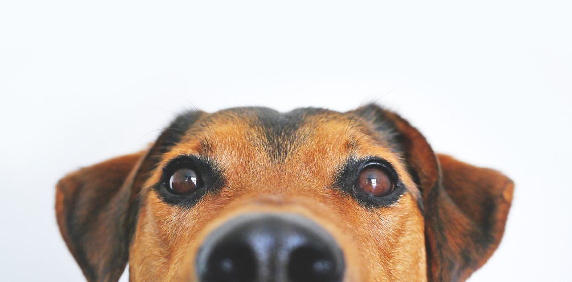 Dlaczego mój pies nie chce jeść?