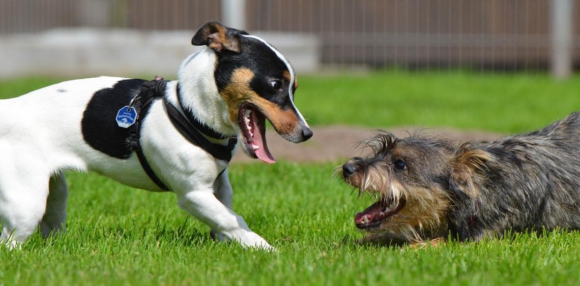13 zasad bezpiecznej zabawy na wybiegu dla psów
