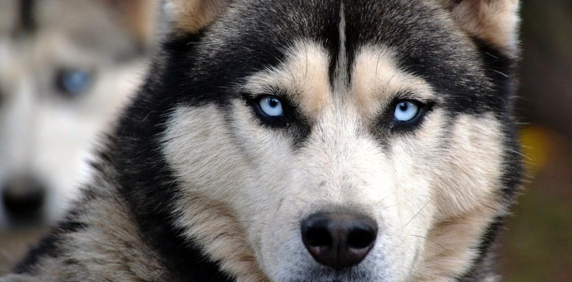 Najczęstsze problemy behawioralne psów
