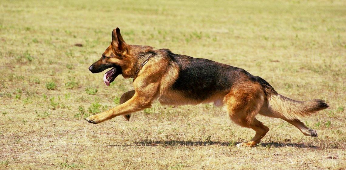 USA 34 lata więzienia za zabójstwo psa