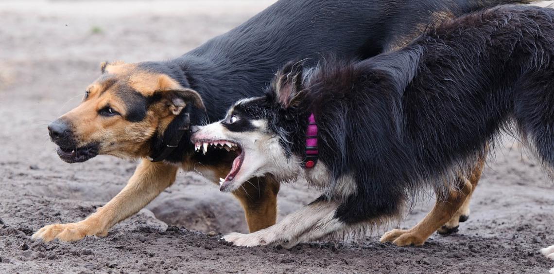 Zdrowe zasady w psim parku