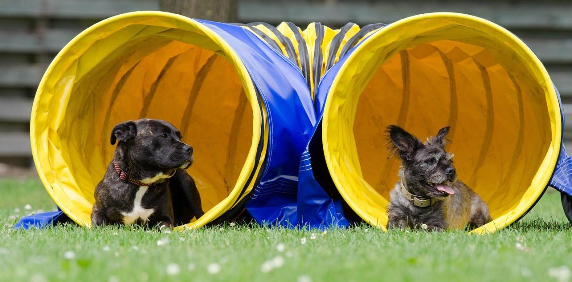 planowane wybiegi dla psów