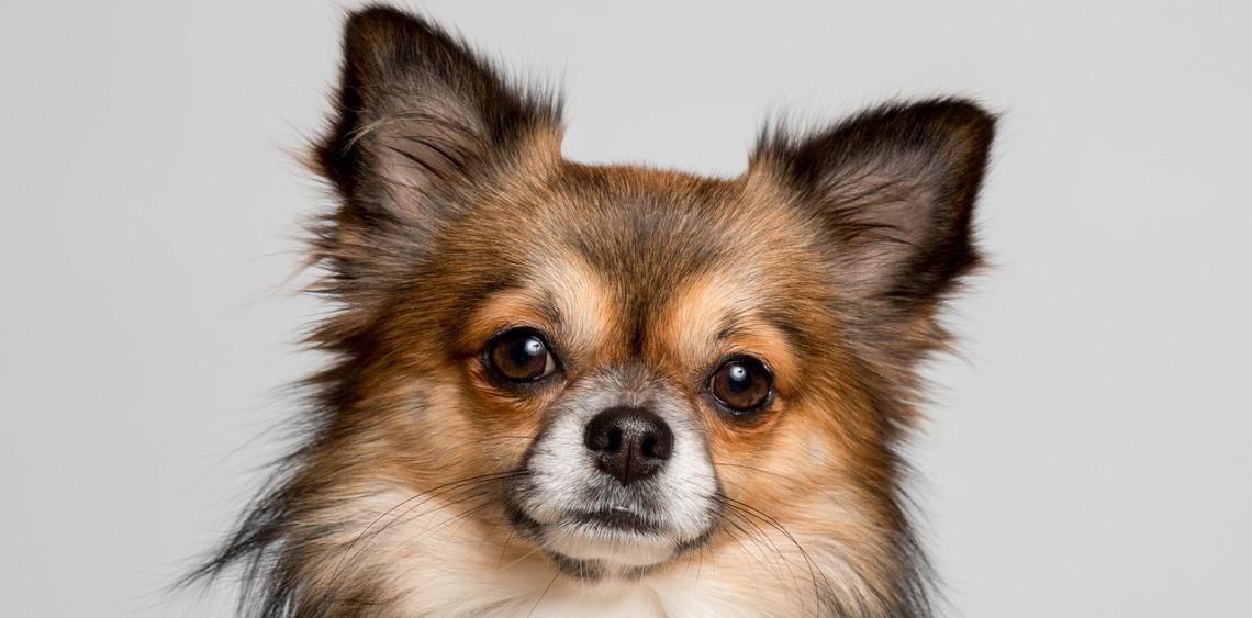 Saneczkowanie u psa