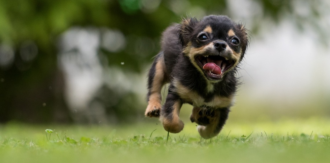 W co bawić się z psem