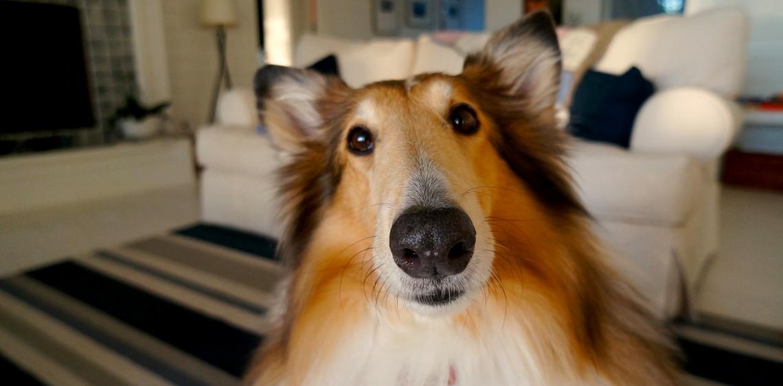 5 oznak, że Twój pies Cię kocha
