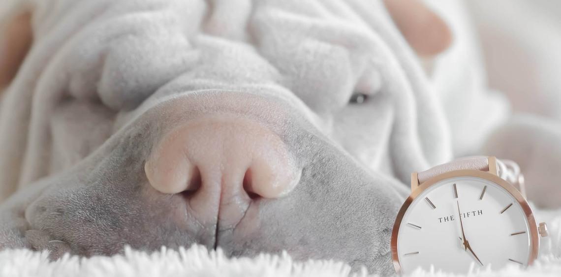 Jak pomóc psu przetrwać Sylwestra
