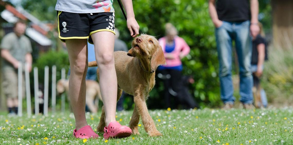 Świadomy właściciel a rzeczywistość psich parków