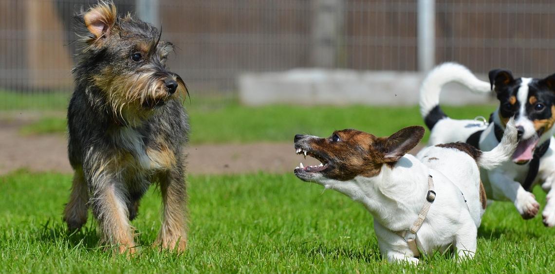 agresywny pies w parku dla psów
