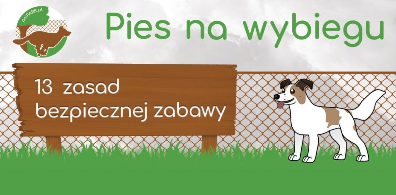 Jak bezpiecznie korzystać z wybiegu dla psów