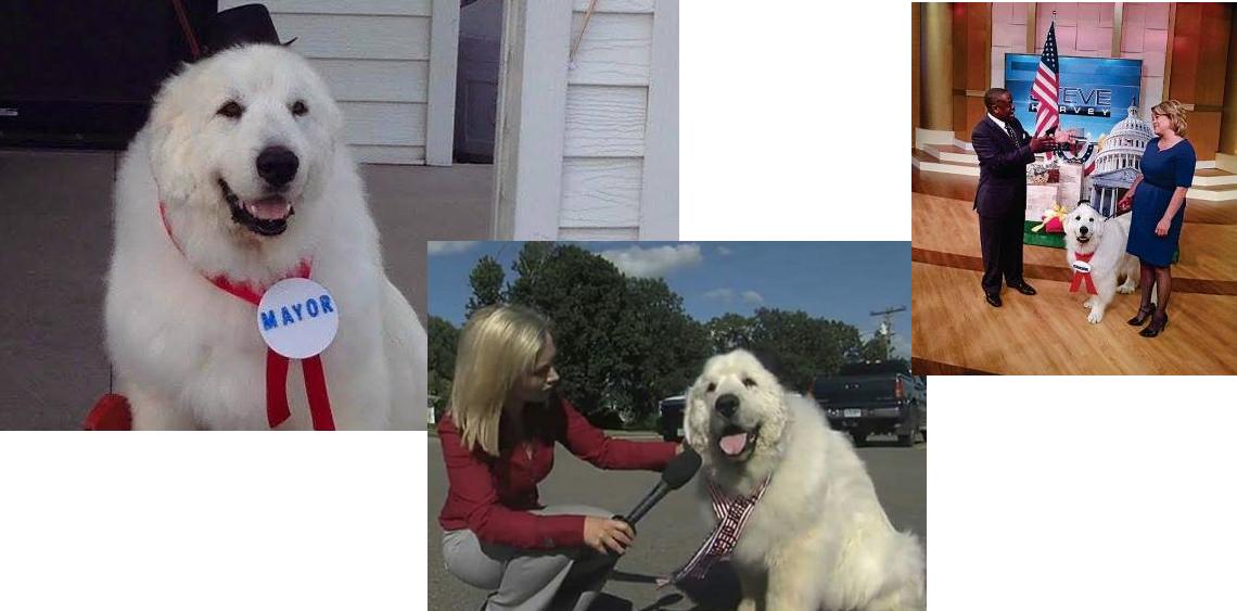 Pies burmistrzem w USA