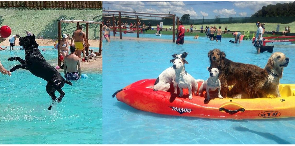 Wodny park dla psów w Barcelonie
