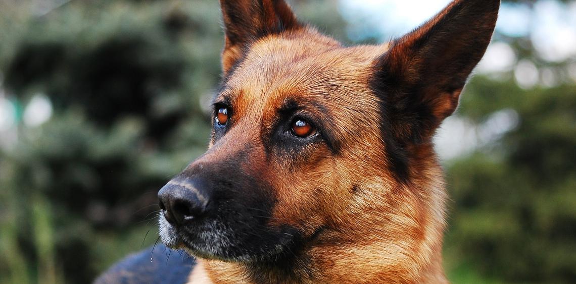 Funkcjonariusz Straży Granicznej z psem Jano wyróżnieni przez MSWiA