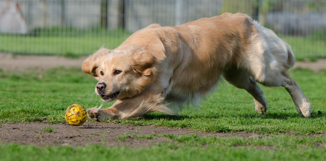 Sport i aktywność z psem