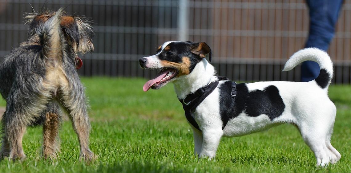 Dlaczego warto korzystać z psich parków i wybiegów?