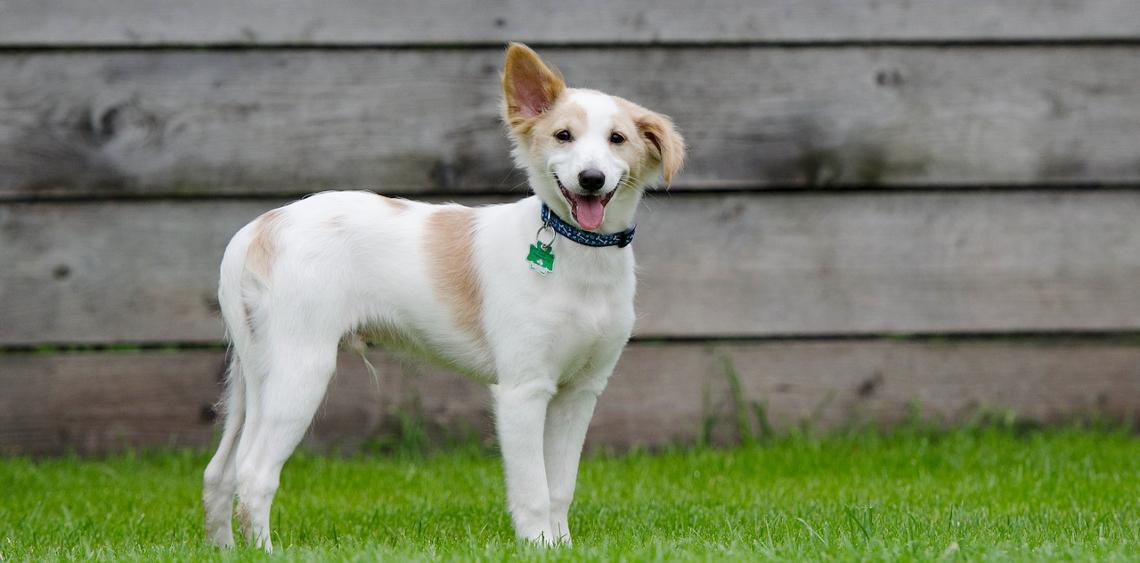Jak powinien wyglądać bezpieczny wybieg dla psów