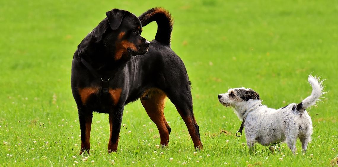 Wybiegi dla psów Warszawa