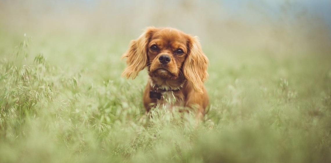 Wybiegi dla psów Śrem