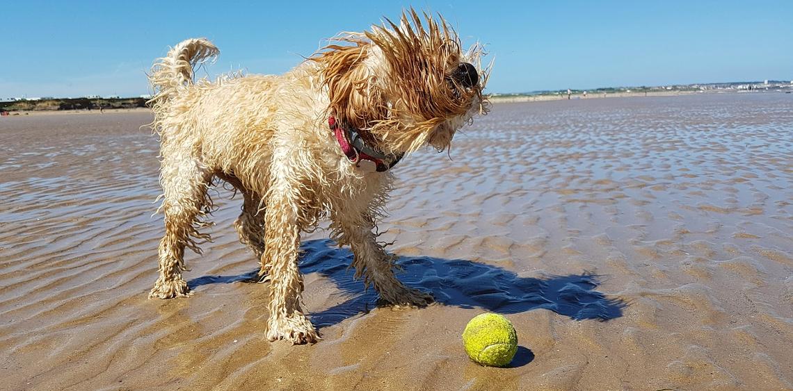 Plaże dla psów w Polsce