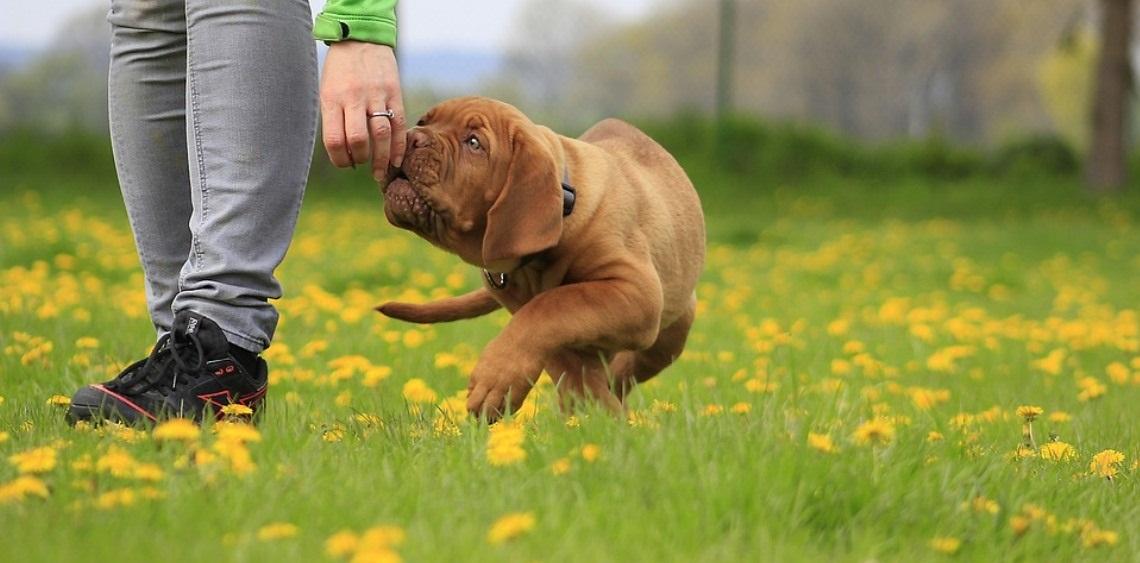 Wybiegi dla psów Gdynia