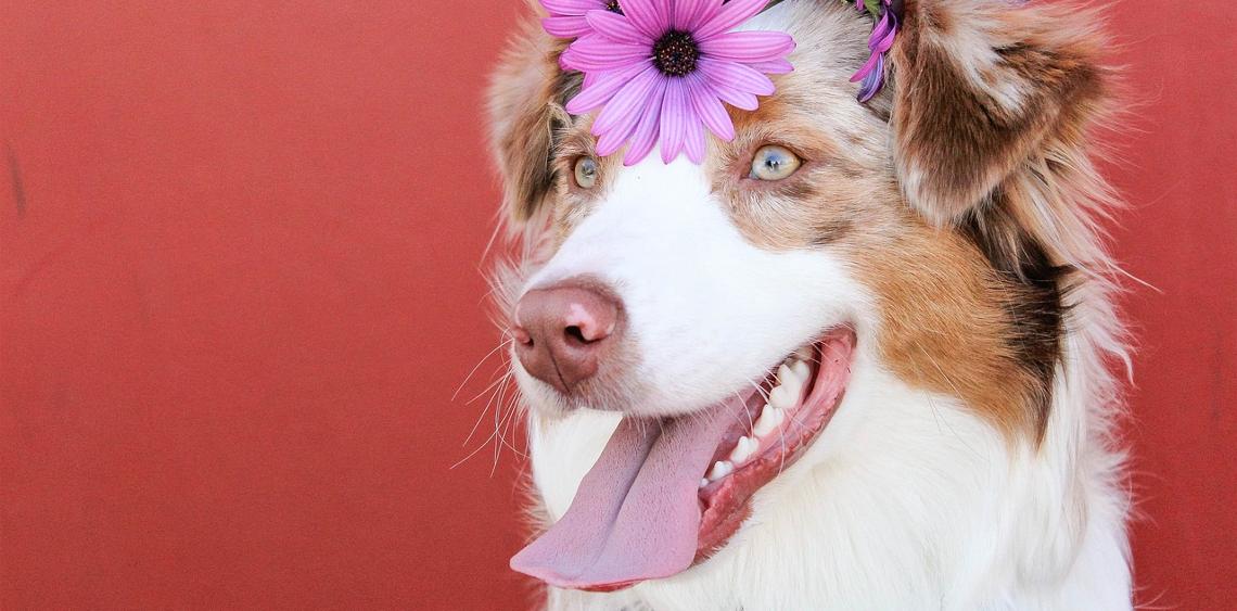 11 sygnałów, że kochasz swojego psa najbardziej na świecie