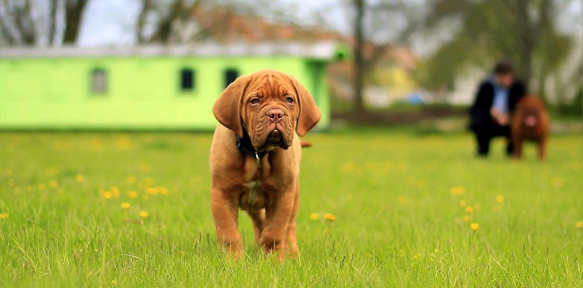 Wybieg dla psów Świnoujście, Park Zdrojowy