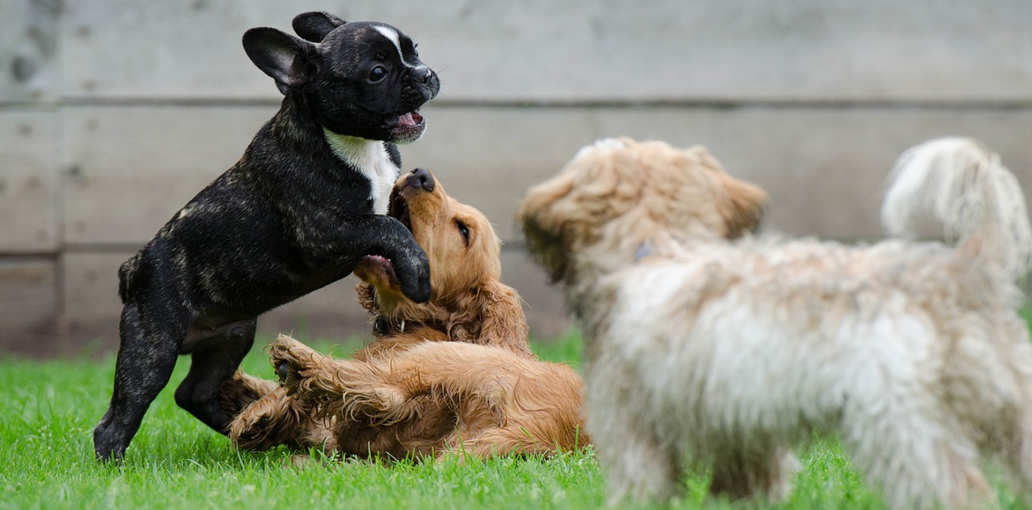 Czy każdy pies może iść do psiego parku