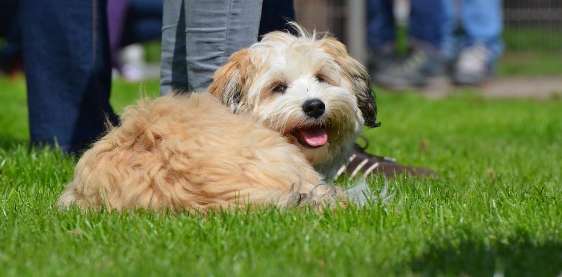 sposoby na wybieg dla psów