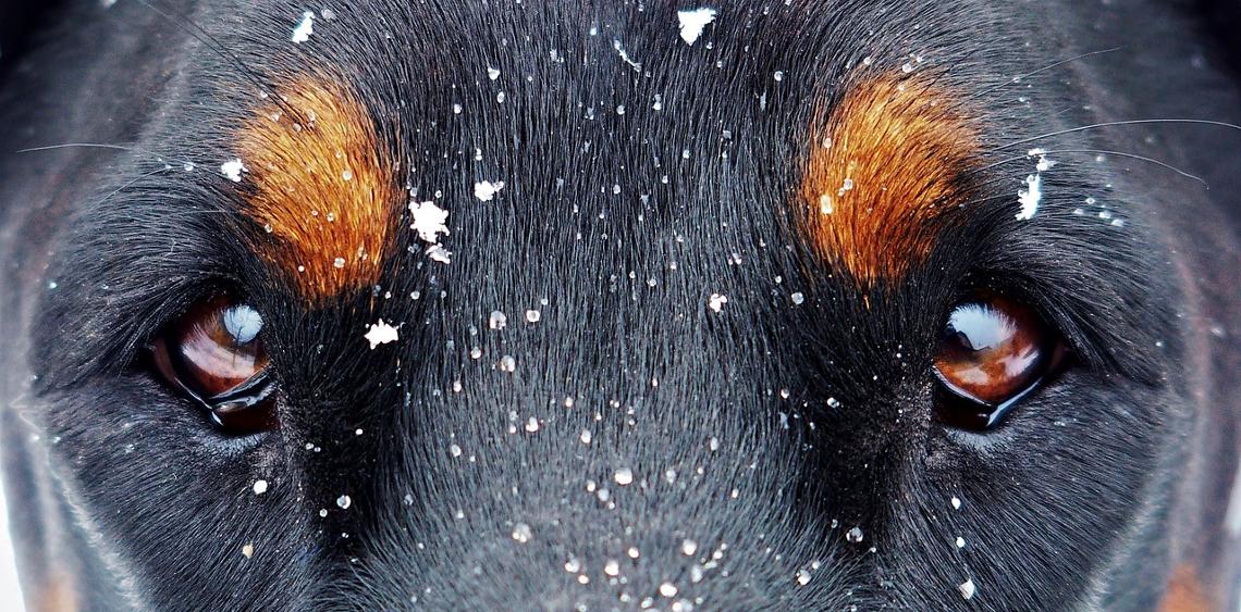 Złe traktowanie psa i innych zwierząt - gdzie zgłosić
