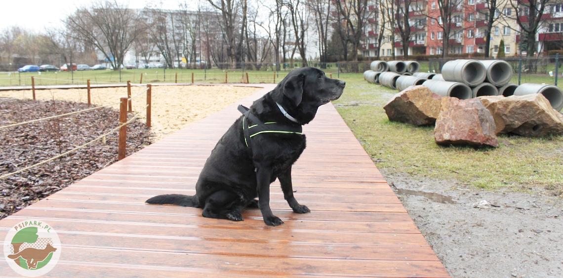 Wybieg dla psów Kraków Czyżyny