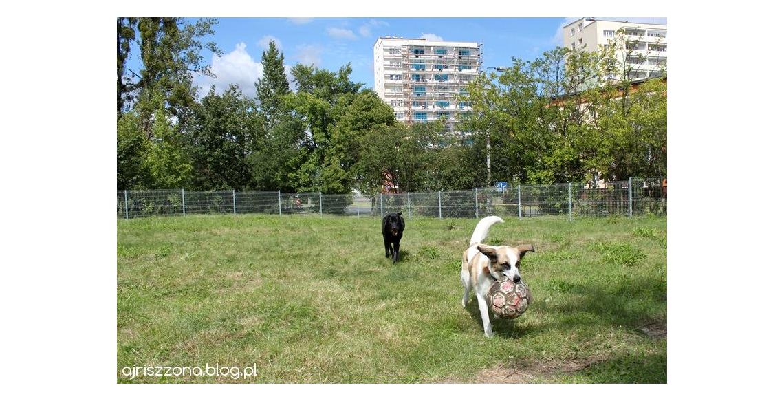 Wybieg dla psów Bydgoszcz Bielawy