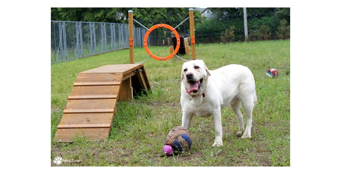 Wybieg dla psów Chorzów Batory
