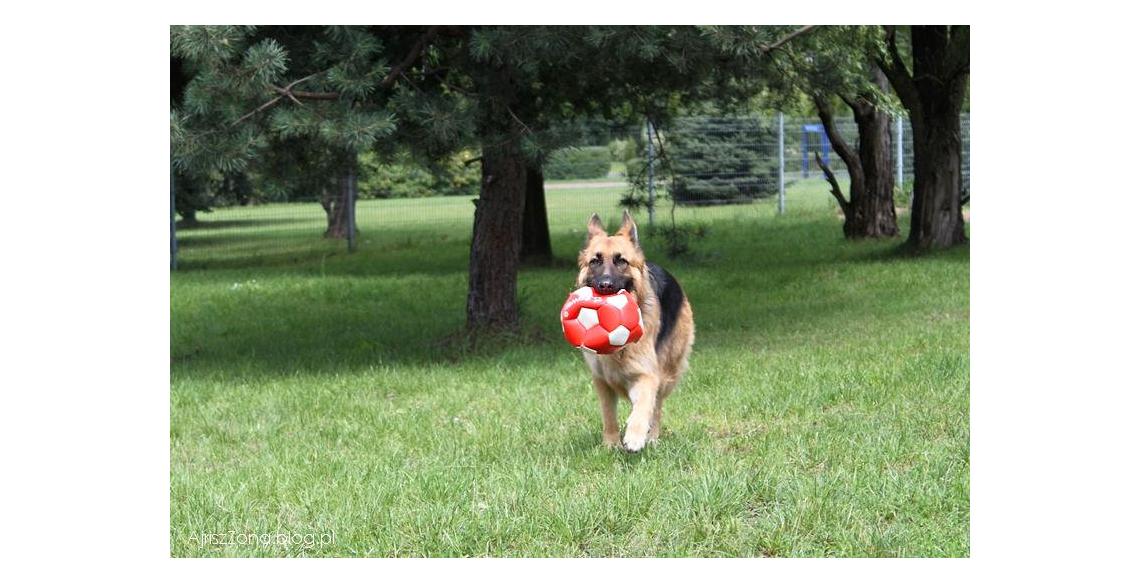 Wybieg dla psów Sosnowiec Park Środula