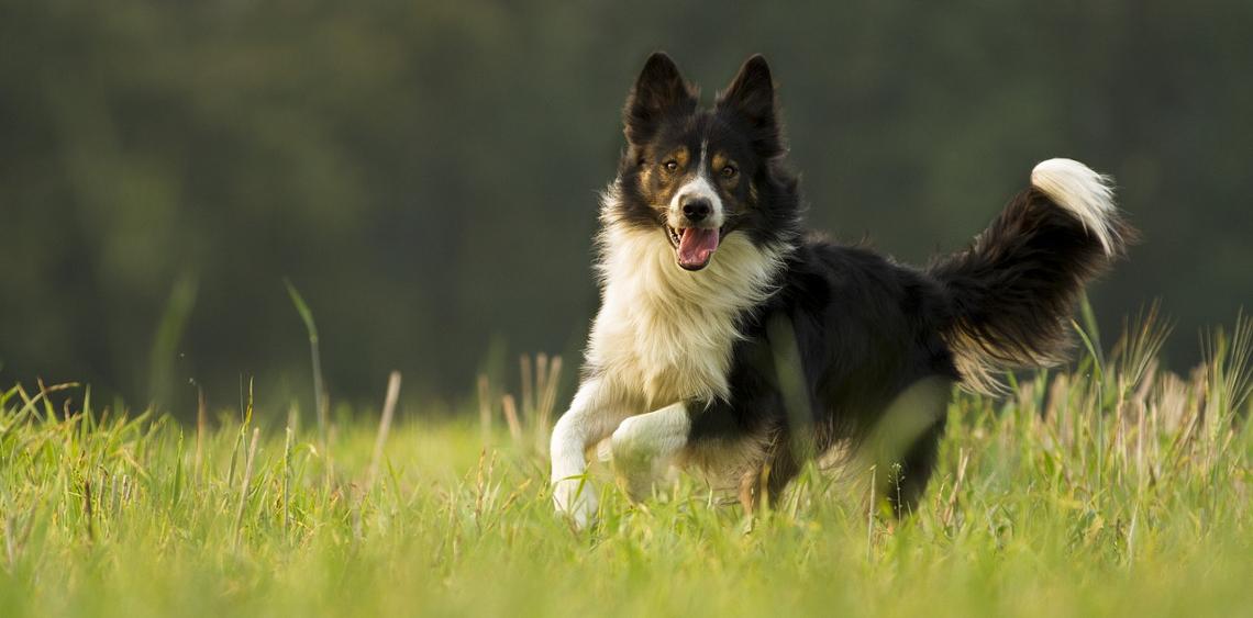 Pies na wybiegu [CZĘSTE PYTANIA]