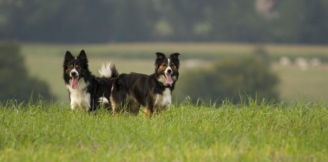 O wybiegach dla psów trzeba edukować, a nie nimi straszyć