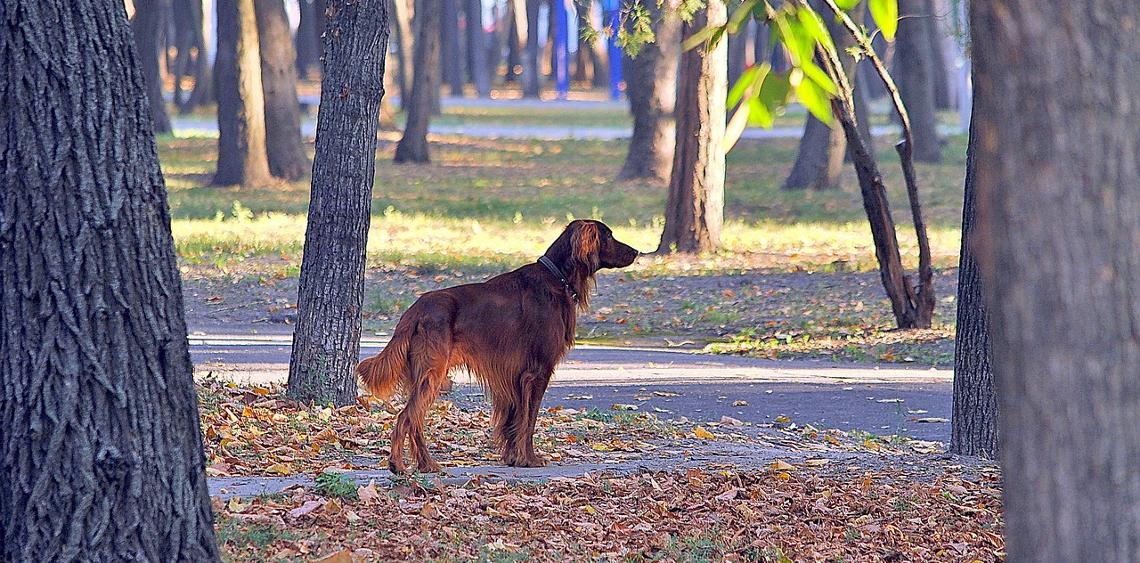 Protest przeciwko budowie psiego parku w Płocku