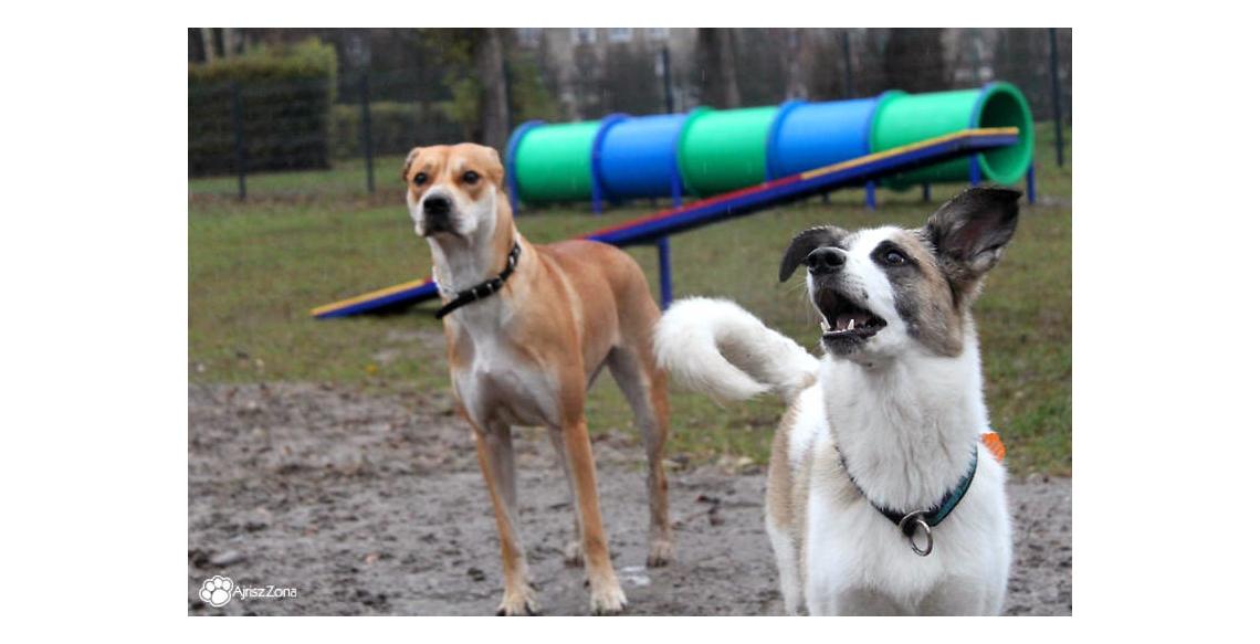 Wybieg dla psów Tychy Hlonda