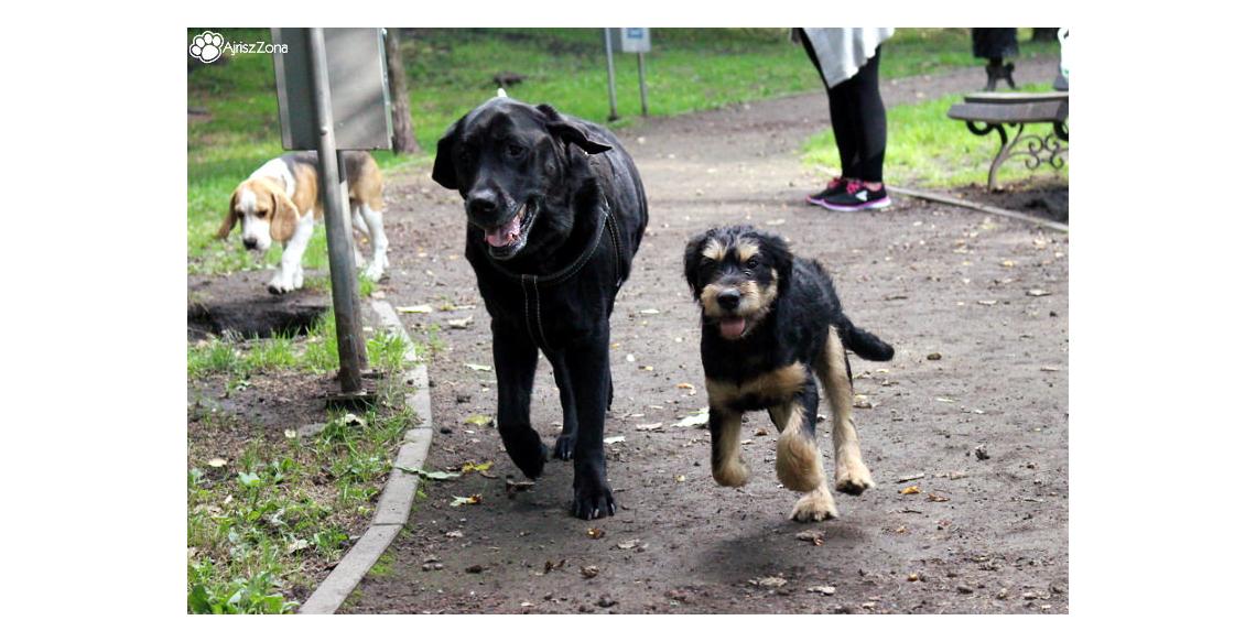 Wybieg dla psów Ruda Śląska Parkowa Nowy Bytom