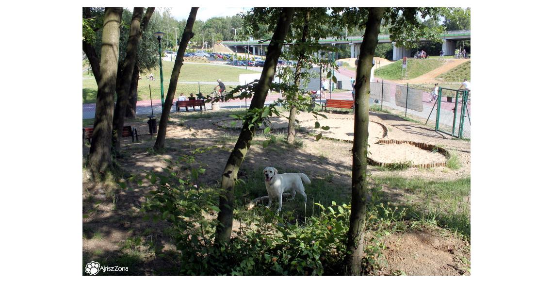 Wybieg dla psów Wodzisław Śląski Trzy Wzgórza