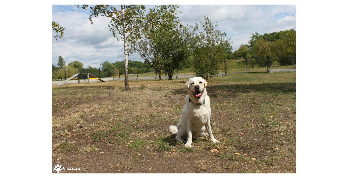 Wybieg dla psów Żory Park Cegielnia