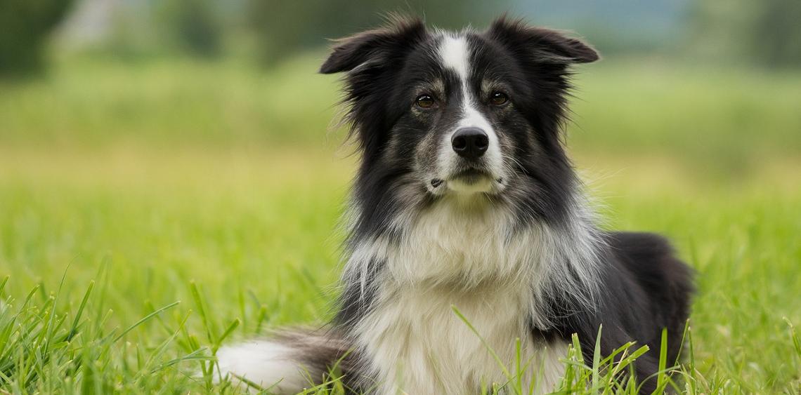 Jak korzystamy z psich parków i wybiegów? [ANKIETA]